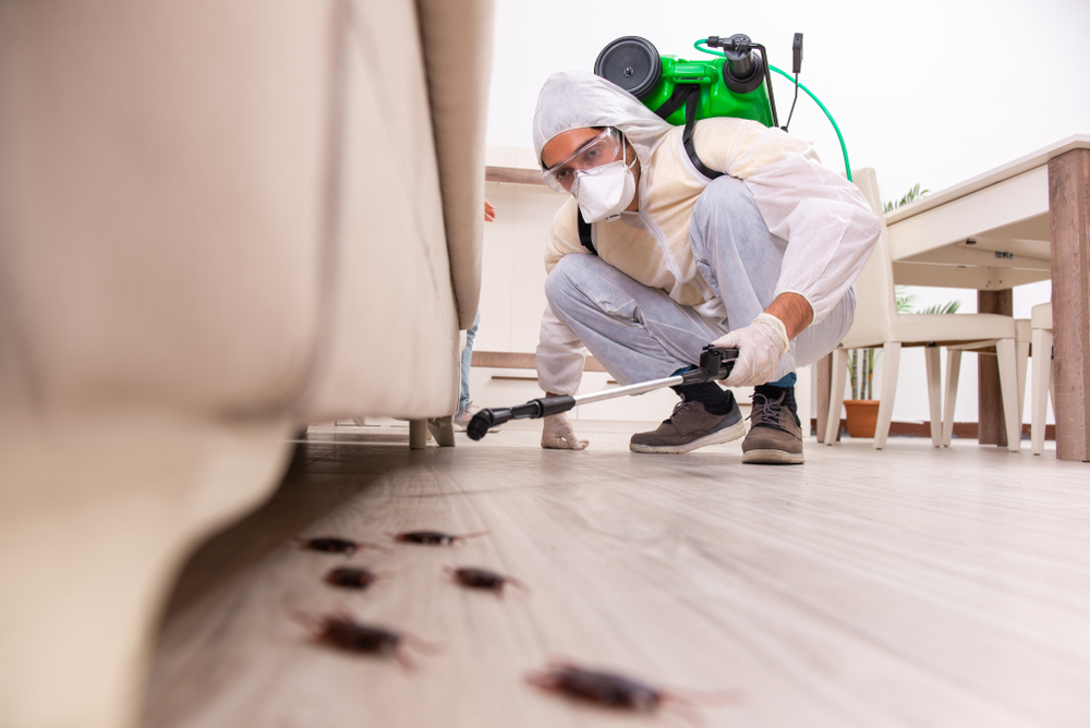 Pest Control Tips - Your Guide to Apartment Pest Control Service